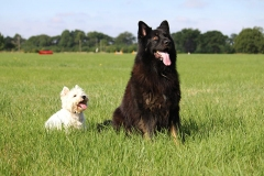 Dogs sitting together in a field