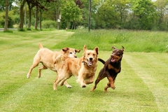 Dogs running outdoors