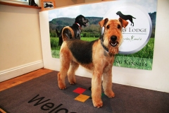 Dog in the Hunters Lodge reception