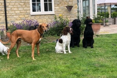 Home boarding dogs